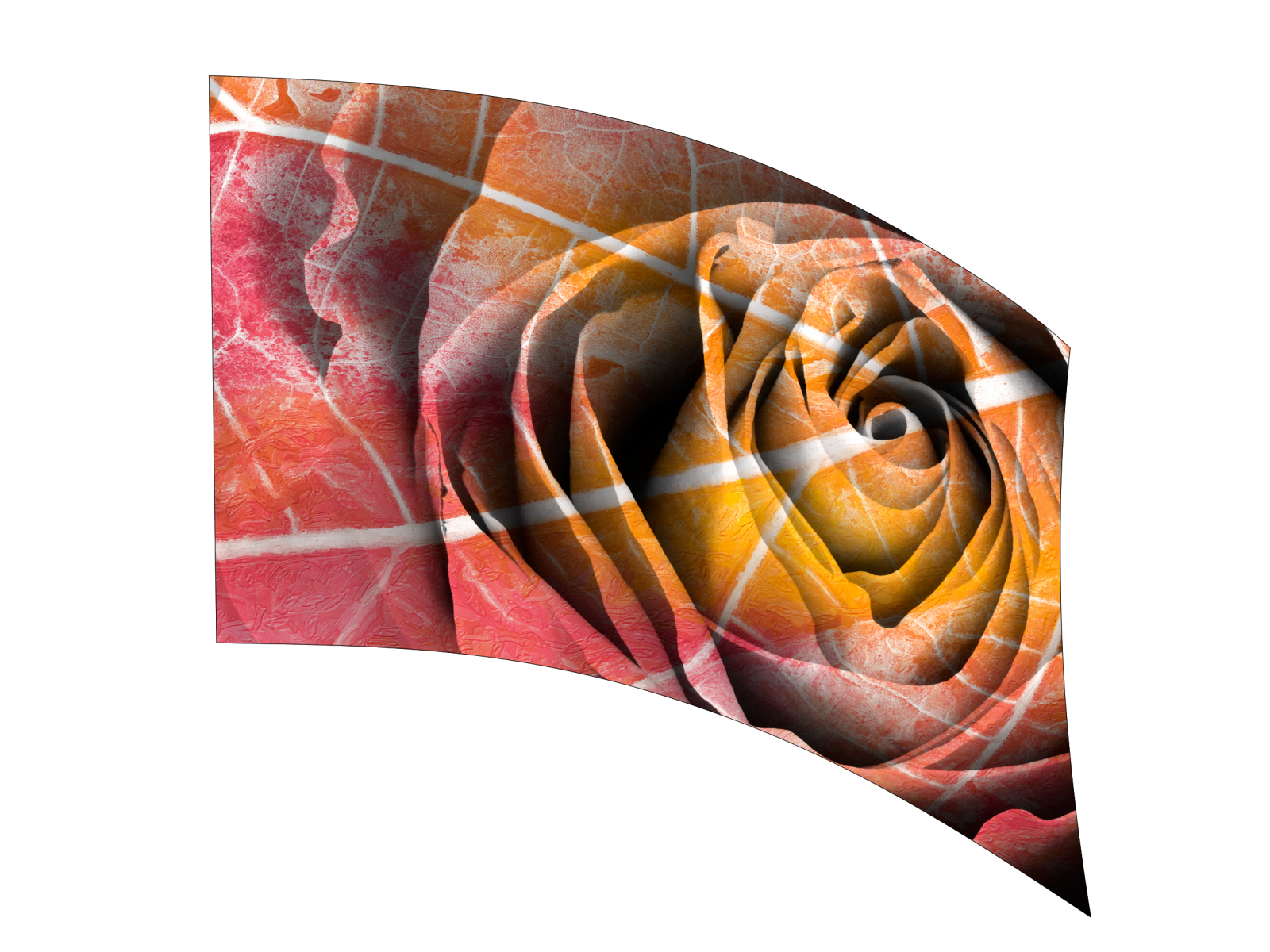 070209s - 36x52 Standard Pastel Decay Rose