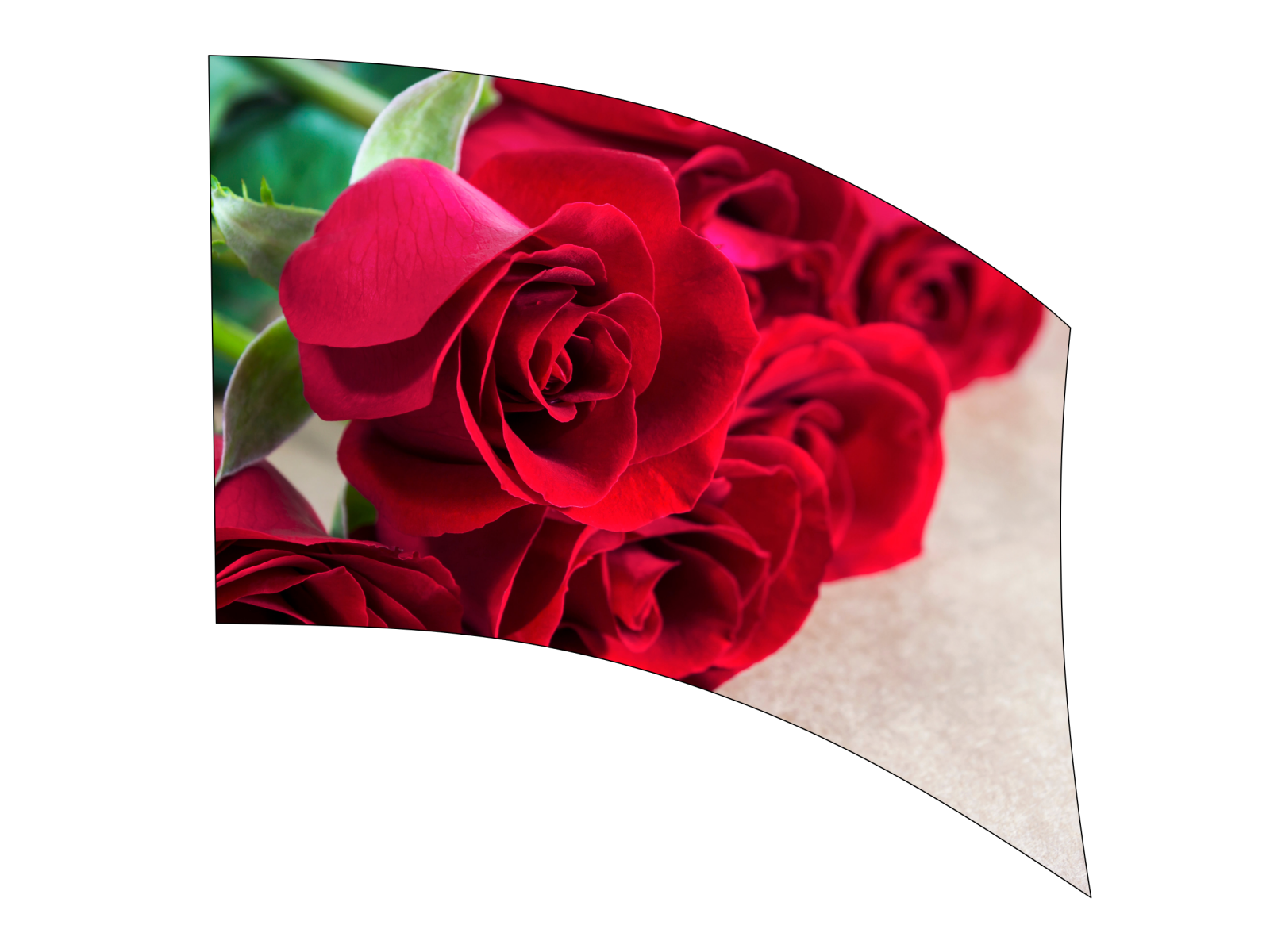 070211s - 36x52 Standard Red Rose