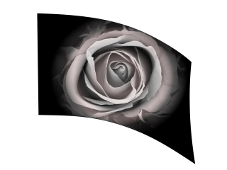 070205s - 36x52 Standard Black and White Colorized Rose