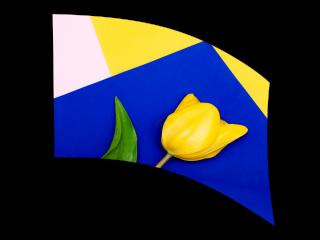 070212s - 36x52 Standard Yellow Tulip