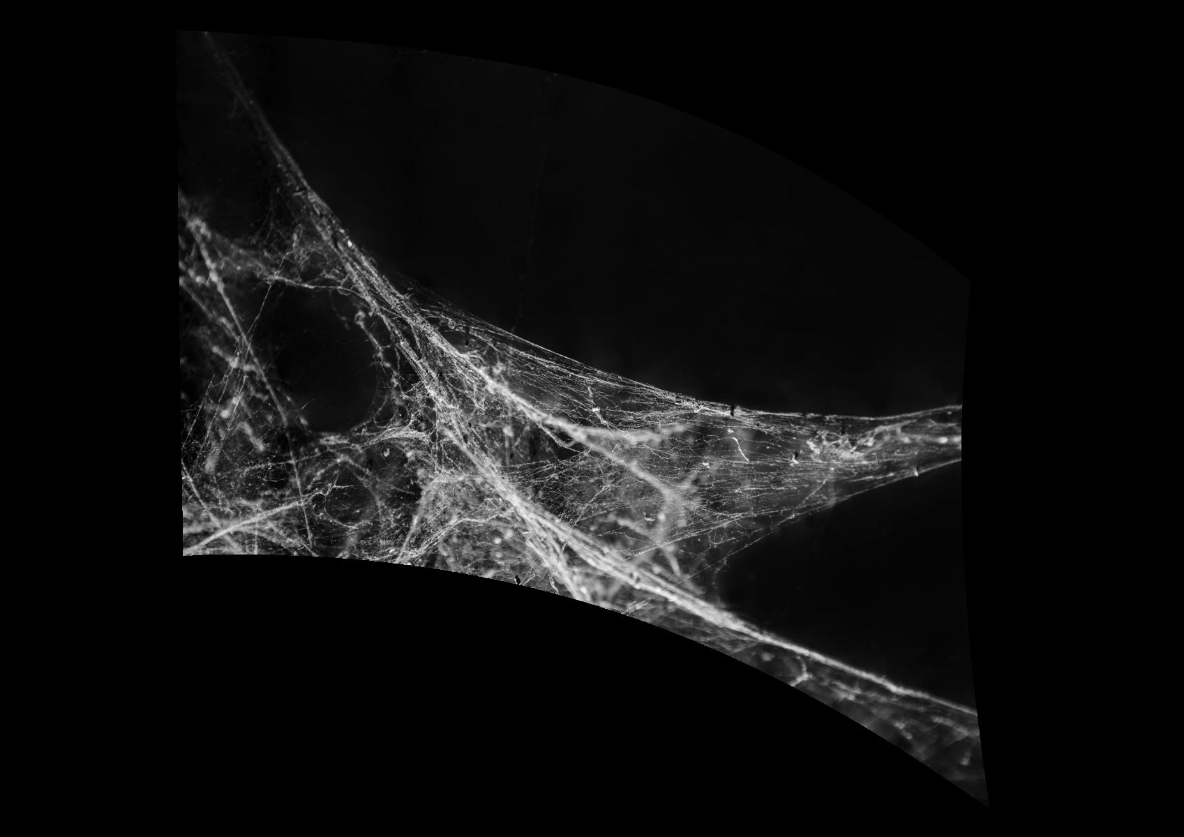 070101s - 36x54 Standard Spiderweb