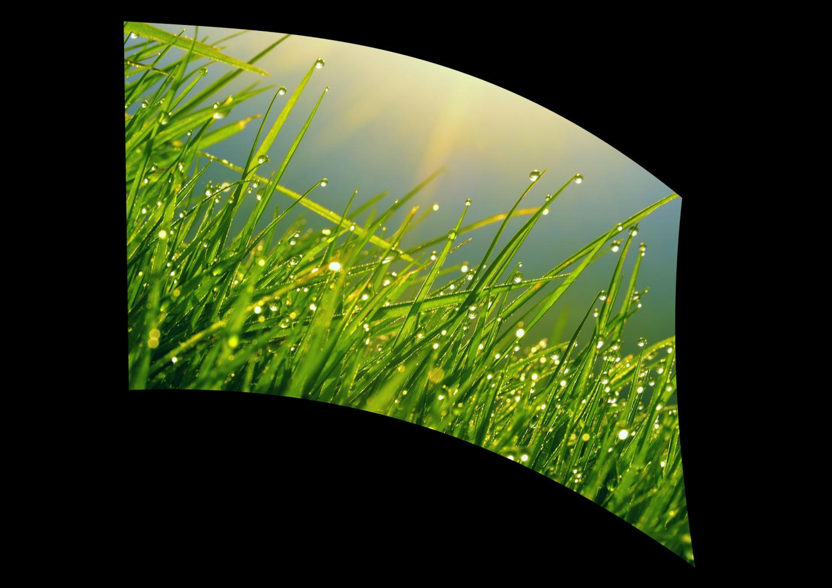 070308s - 36x54 Standard Dewey Grass