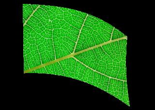 070301s - 36x54 Standard Leaf Closeup 1