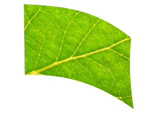 070302s - 36x54 Standard Leaf Closeup 2