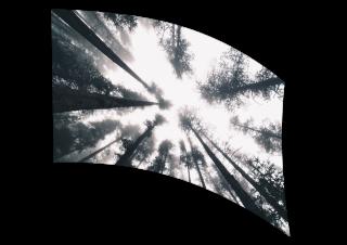 070307s - 36x54 Standard Upward Forrest