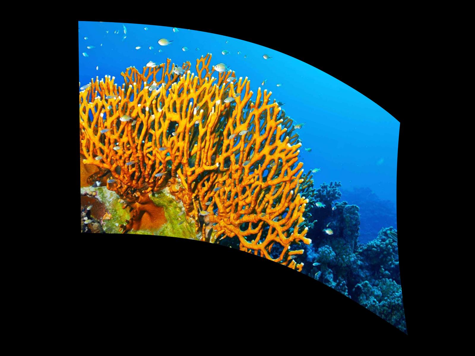 040307s - 36x54 Standard Underwater Coral